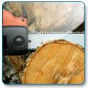 Lumbering Through Waste Reduction